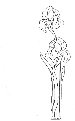 Iris design from The Master's Violin, 1904 (Myrtle Reed)