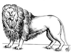 texas lion